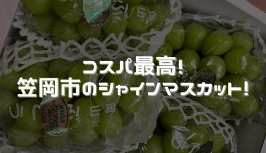 おすすめのふるさと納税返礼品〜果物編【シャインマスカット】